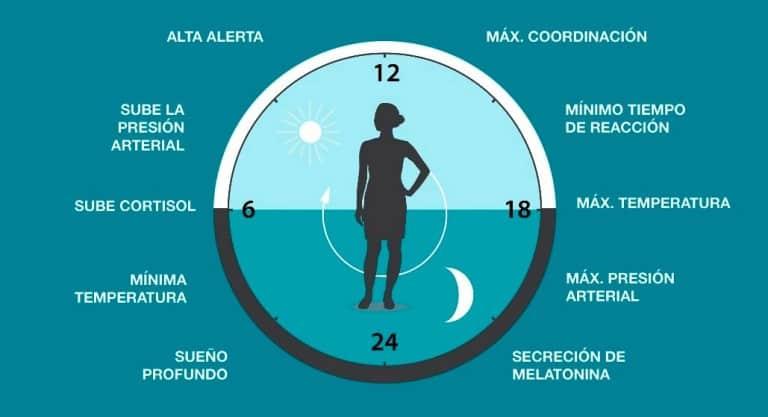 ciclos del sueño y calidad el descanso